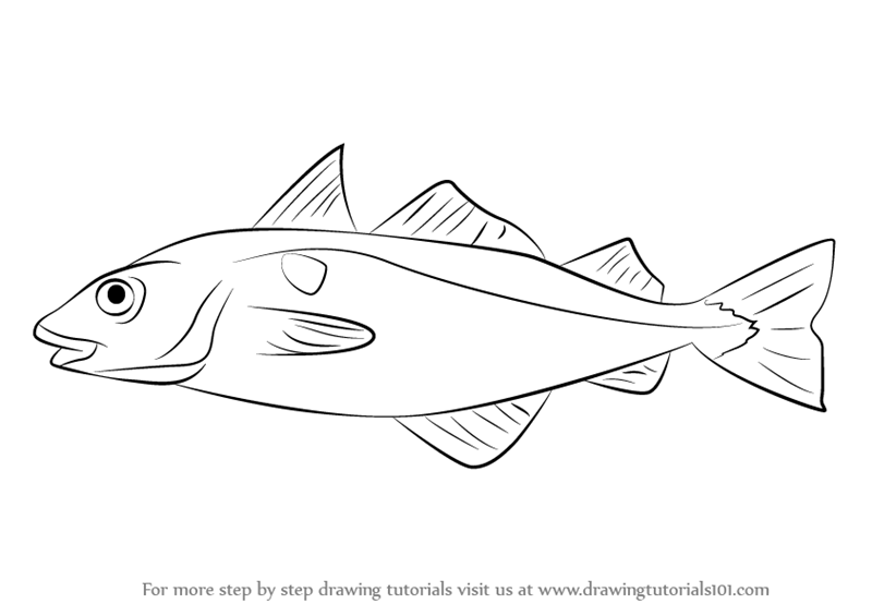 Learn How to Draw a Haddock (Fishes) Step by Step : Drawing.