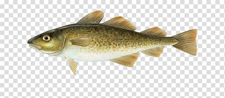 Atlantic cod Alaska pollock Haddock, fish transparent.