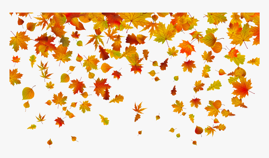 Leaf Color Leaves Autumn Fall Transparent Clipart, HD Png.