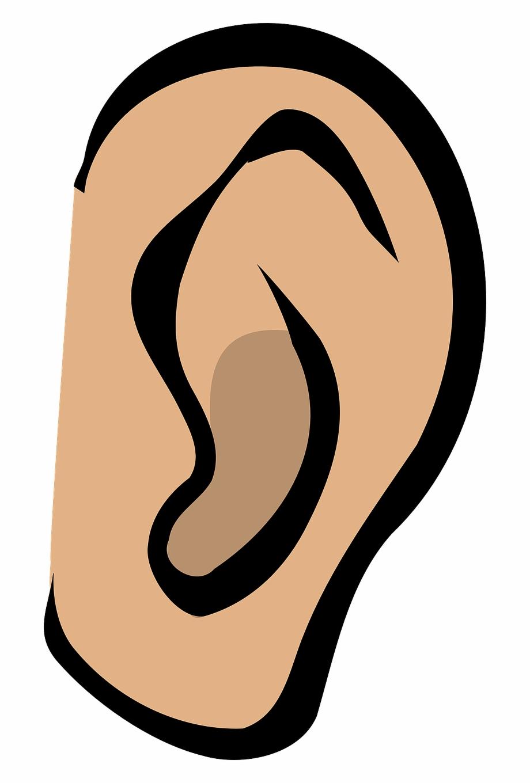 Ear Listen Hear Gossip Sound Whispering Secrets Clip.