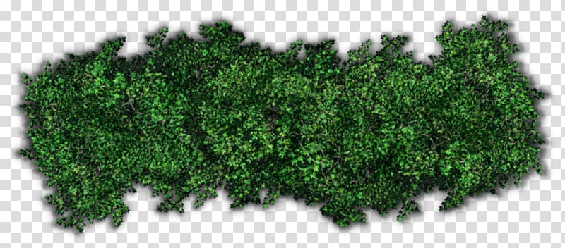 Shrub Tree Hedge , tree transparent background PNG clipart.