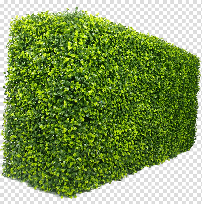 Hedge Green wall Box Garden, hedge shrub transparent.