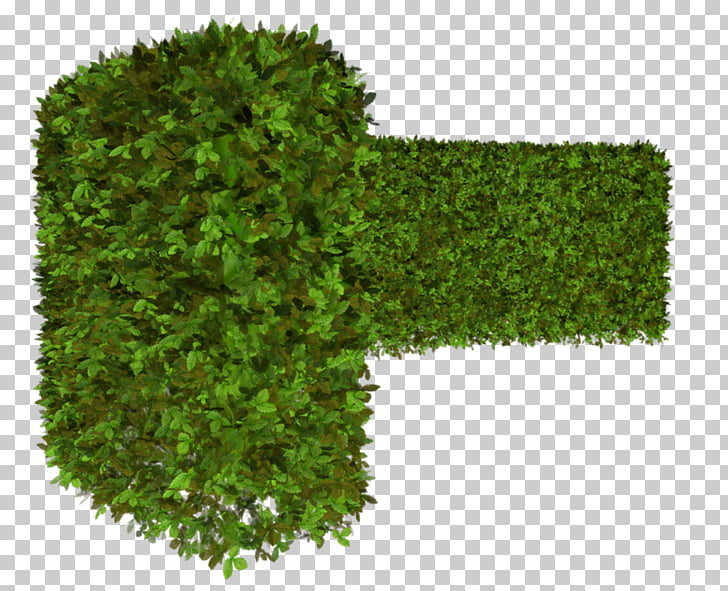 Hedge Vegetation Tree Green Shrub, tree PNG clipart.