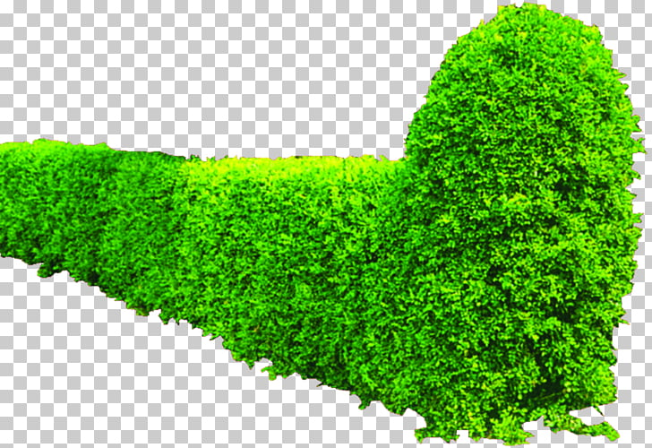 Shrub Greening Hedge, Green bushes PNG clipart.