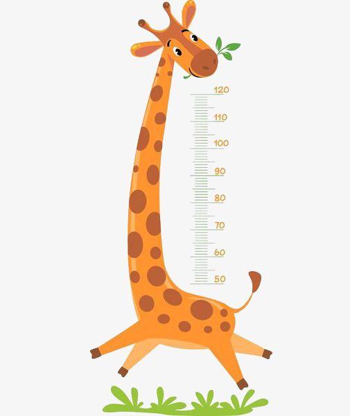 Giraffe Measure Height, Giraffe Clipart, Cartoon, Ruler PNG.