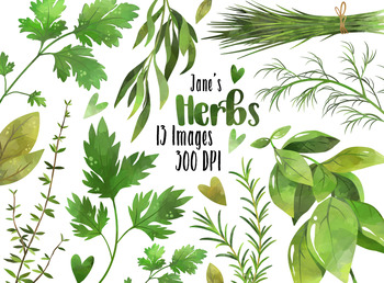 Watercolor Herbs Clipart.