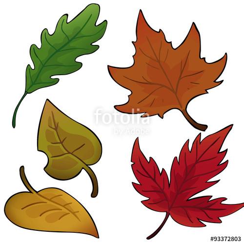 Herbstblätter Sammlung Set