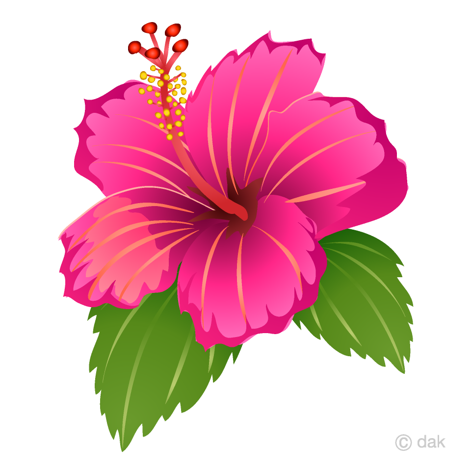 Free Pink Hibiscus Clipart Image|Illustoon.