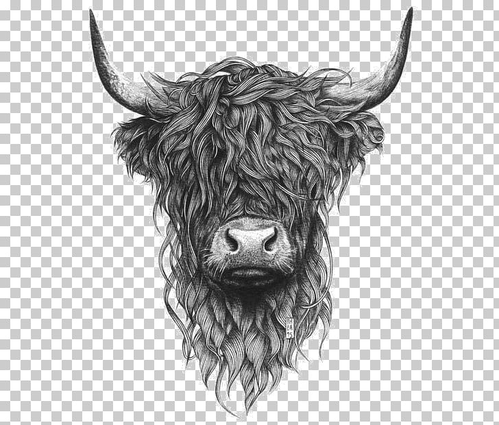 Highland cattle Scottish Highlands Paper Drawing Printing.