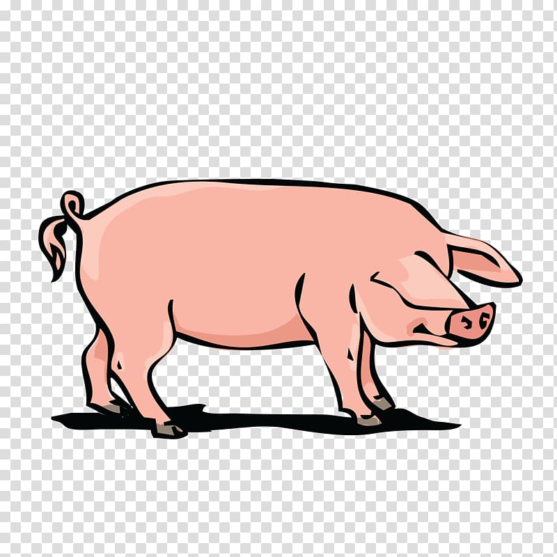 Domestic pig Pork , boar transparent background PNG clipart.