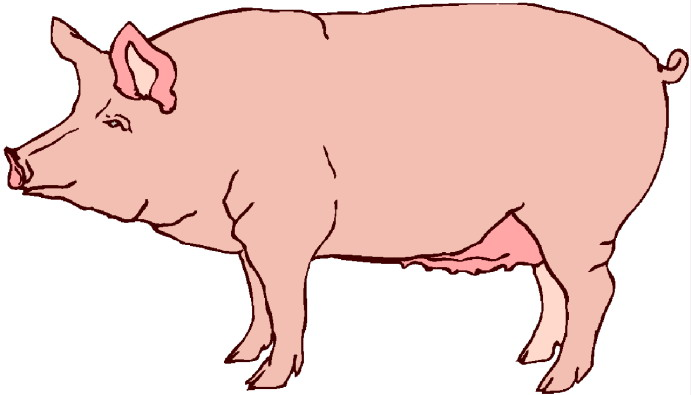 Free Pig Cliparts, Download Free Clip Art, Free Clip Art on.