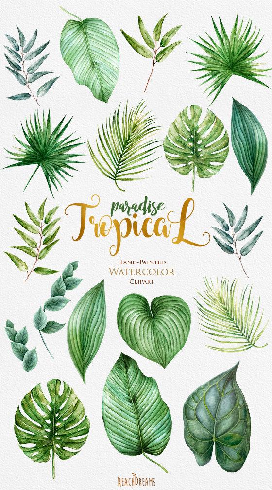 Trópico Clipart, hojas de acuarela tropical, follaje verde.