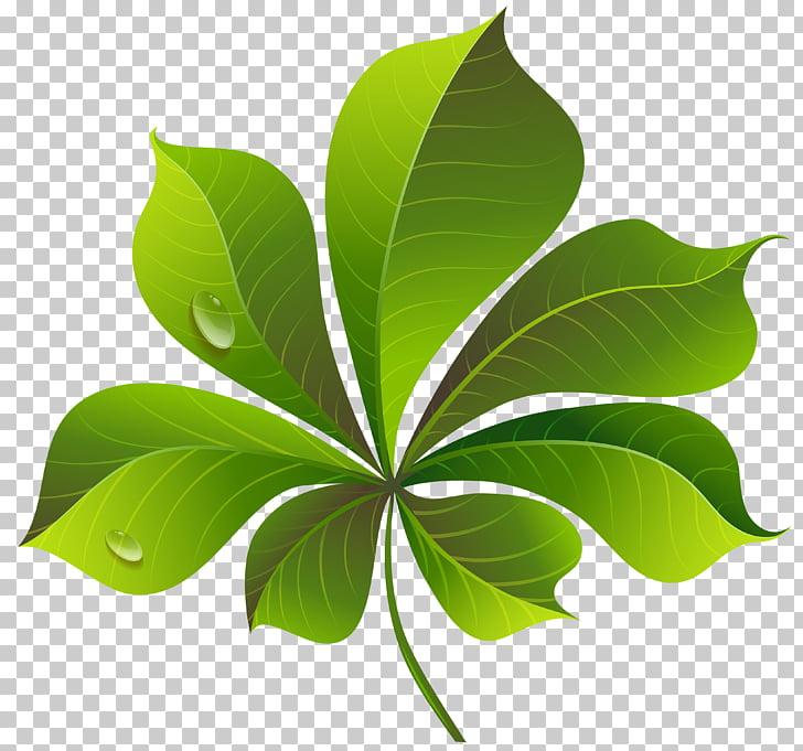 Ilustración de 7 hojas verde, hoja verde, hoja verde caída.