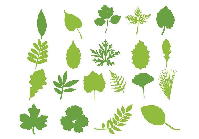 Hojas Vector Leaf Set.