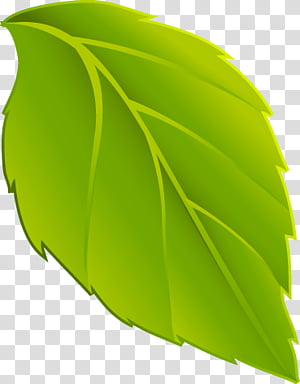 Hoja transparent background PNG cliparts free download.