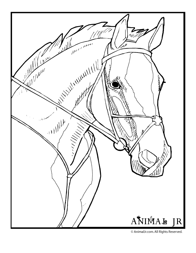 horse head coloring page horse head pictures to color clipart best.