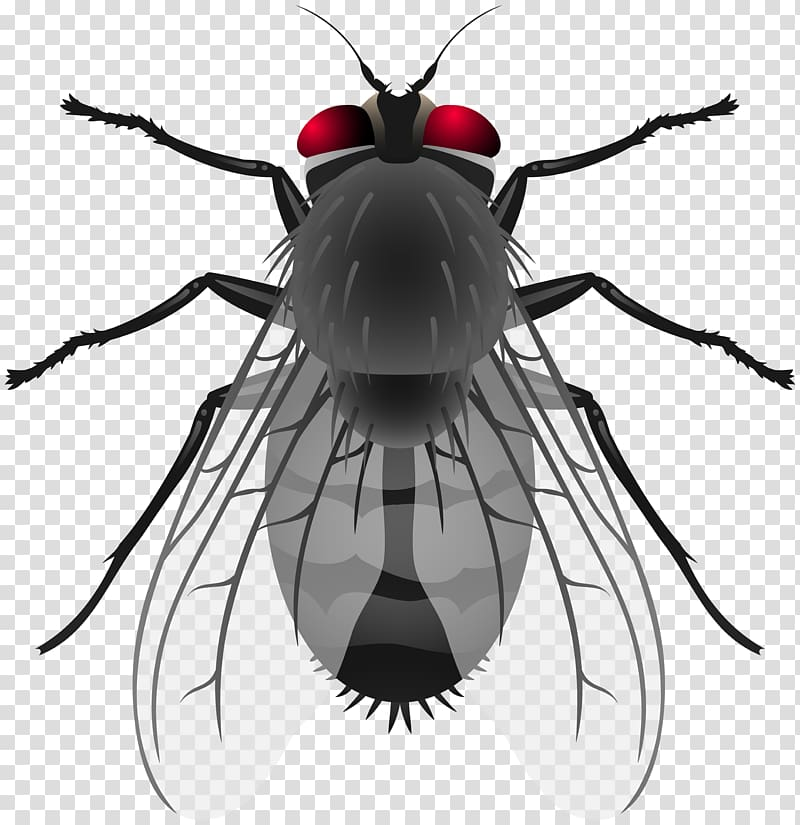 Insect Housefly , insect transparent background PNG clipart.