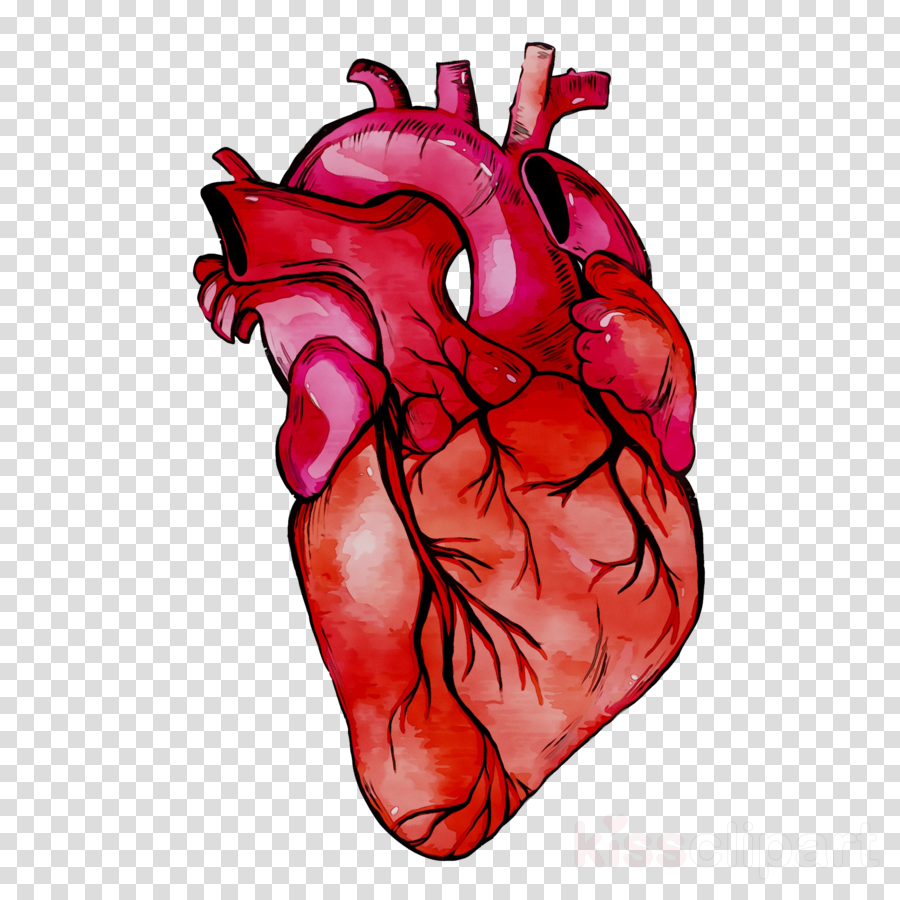 Human Heart Background clipart.