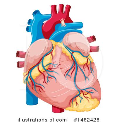 Human Heart Clipart #1462428.