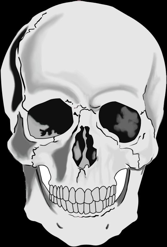 Clipart realistic human skull.