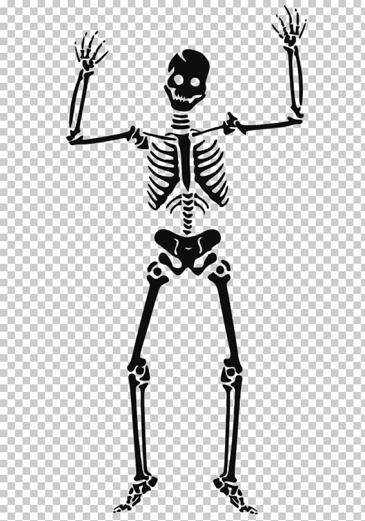 Human skeleton Skull , skull PNG clipart.