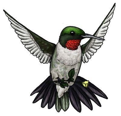 Hummingbird Clipart Free.