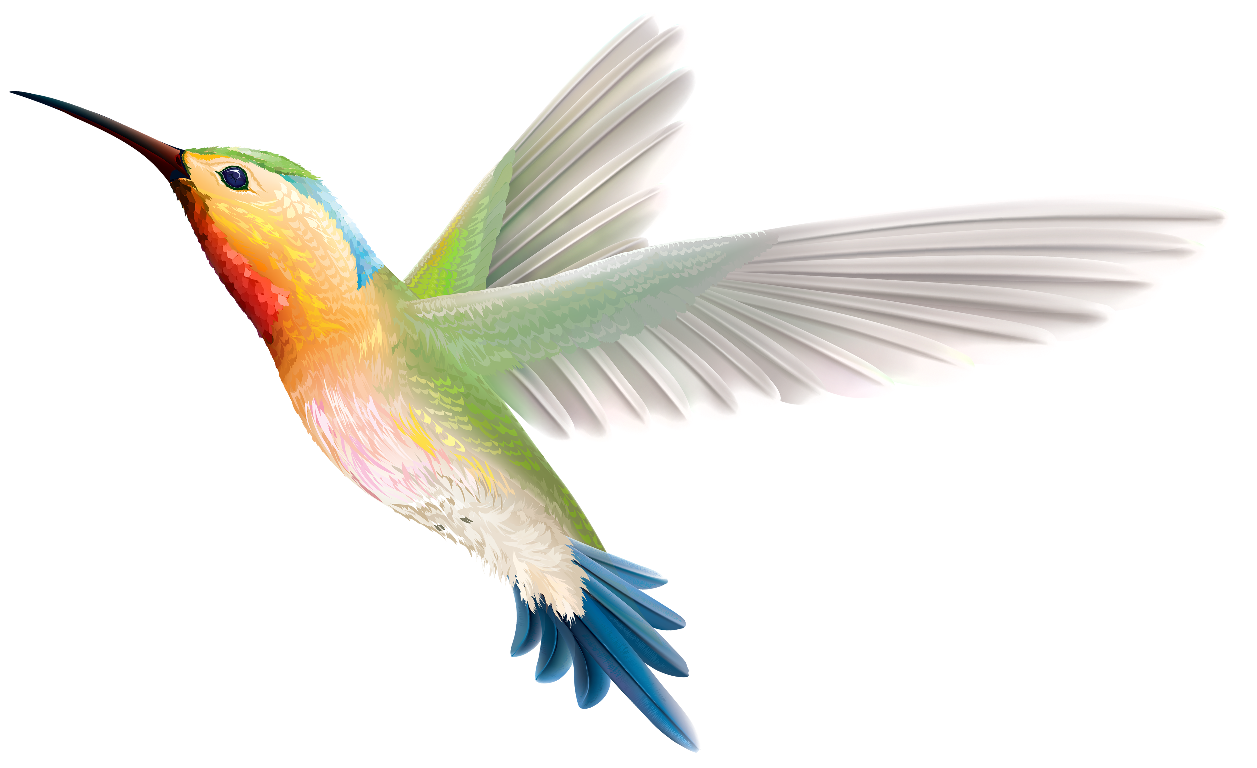 Hummingbird PNG Clipart.