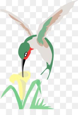 Free download Hummingbird Flower Drawing Clip art.