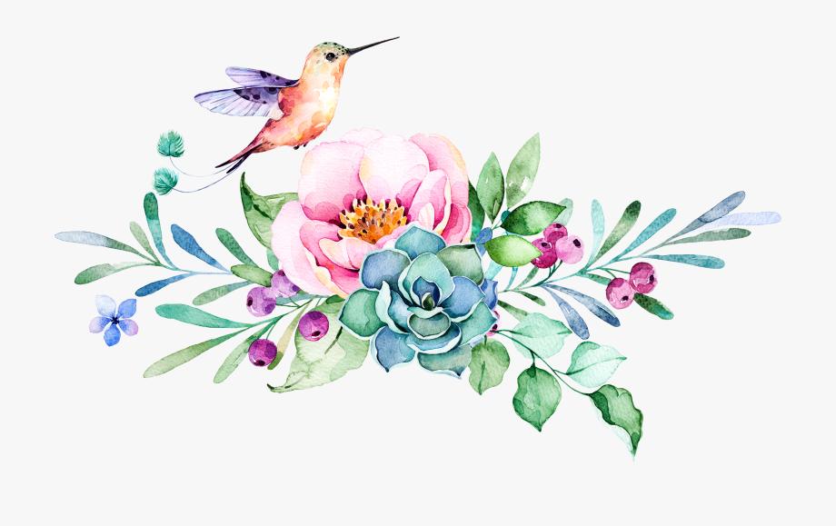 Hummingbird Clipart Watercolor.