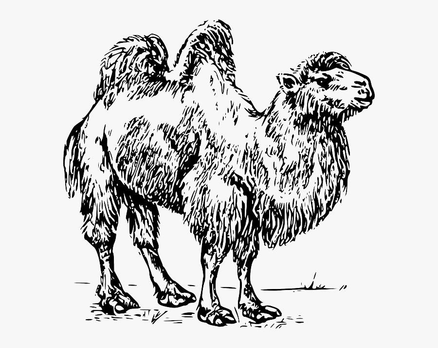 Camel Hump Desert.