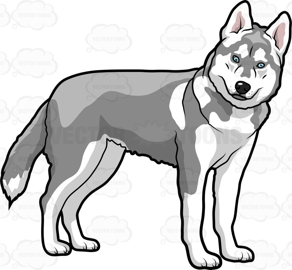 Image result for cartoon drawings of huskies.