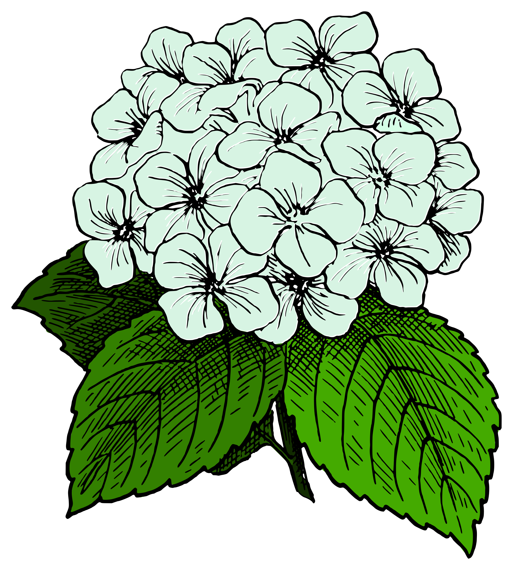 Free Hydrangea Png, Download Free Clip Art, Free Clip Art on.
