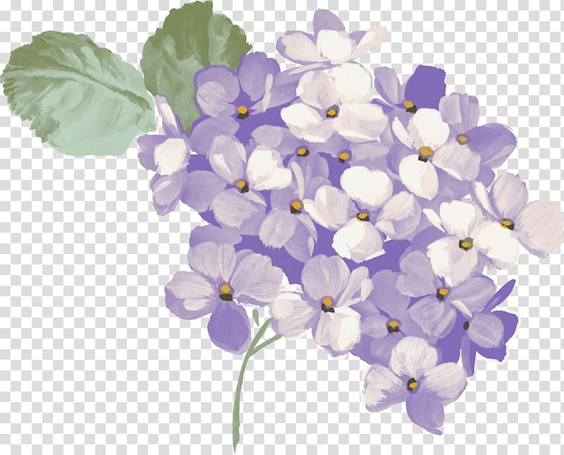 Purple and green hydrangea flowers art, Hydrangea.