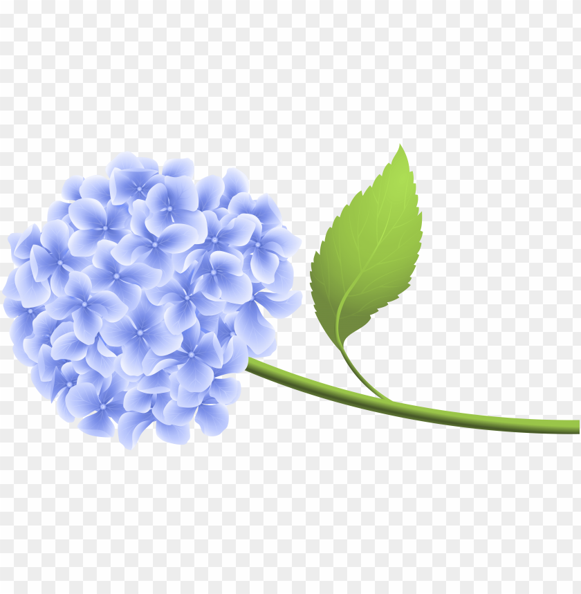 hydrangea clipart transparent background PNG image with.