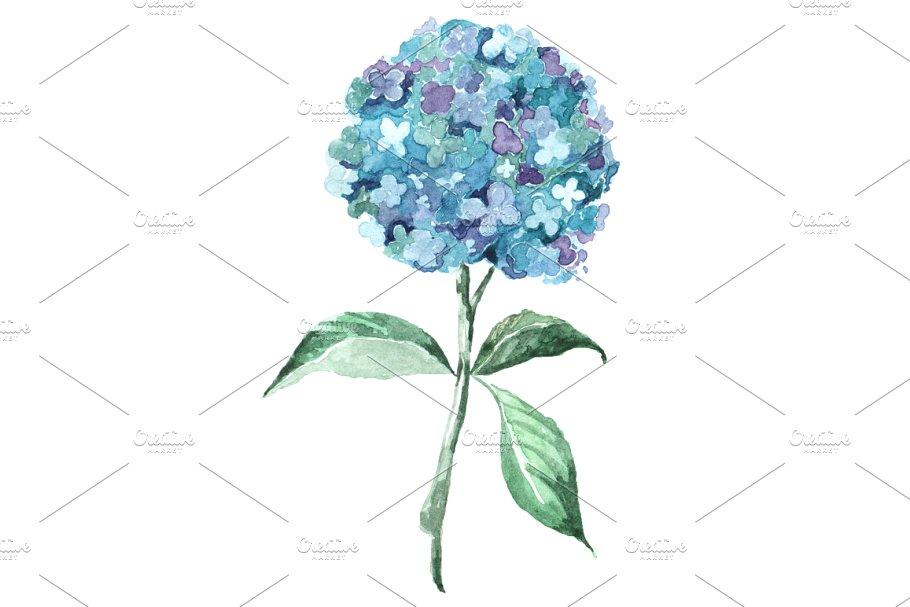 Blue Hydrangea Watercolor Clip Art.