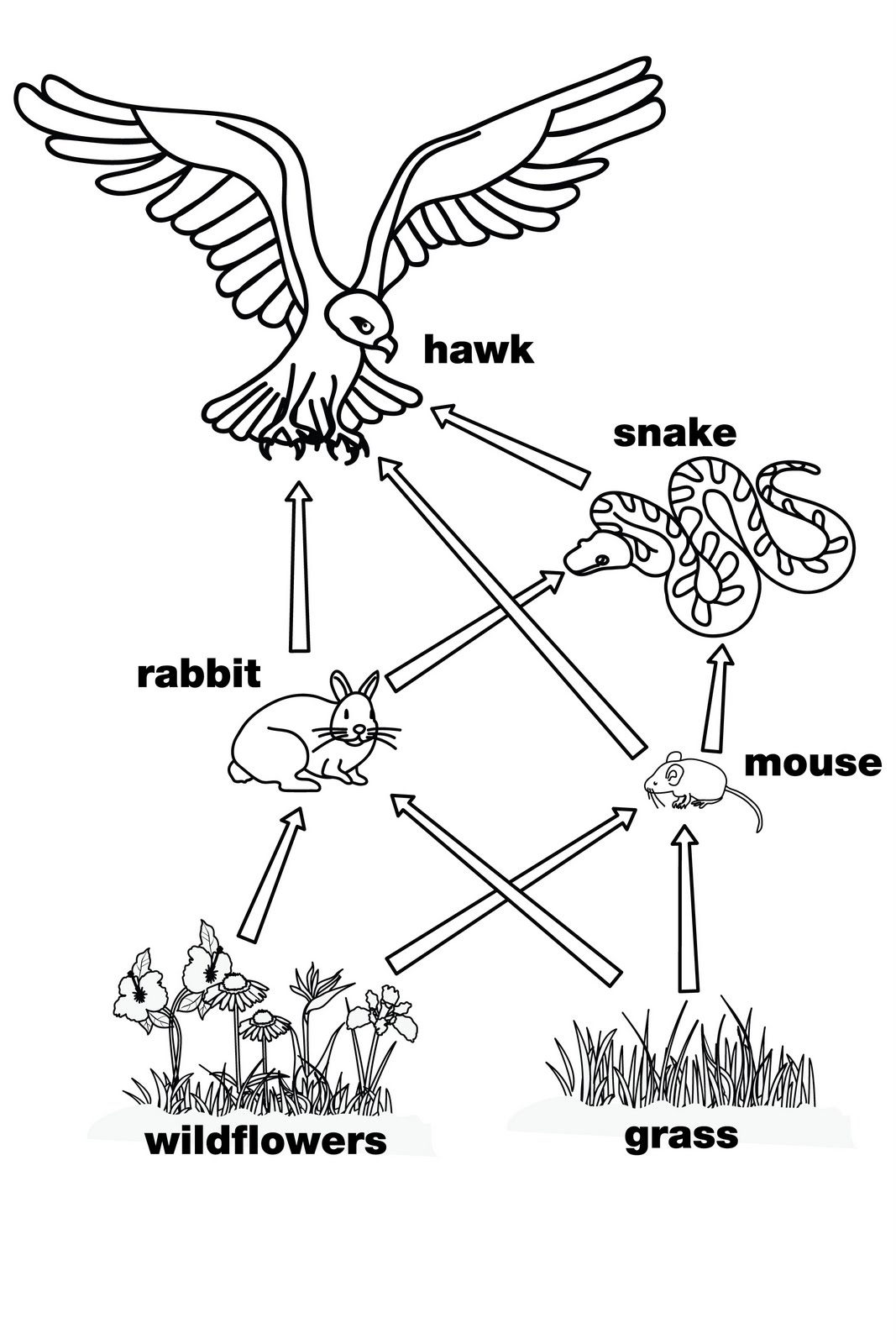 Food Chain Clipart Black And White.