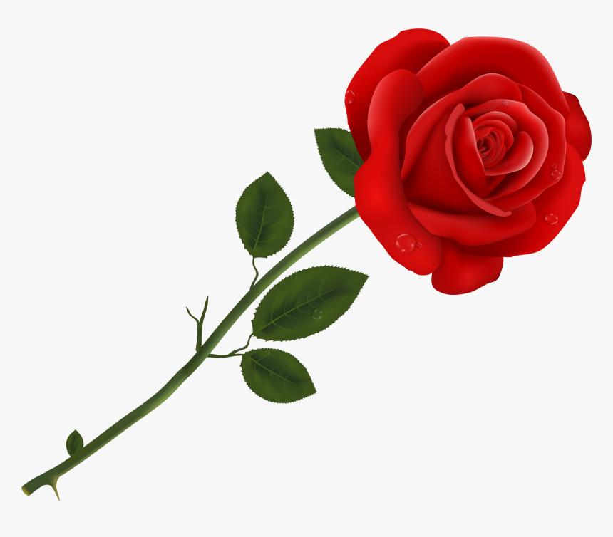 Lancaster Tea Red Rose Pizzeria Red Roses.
