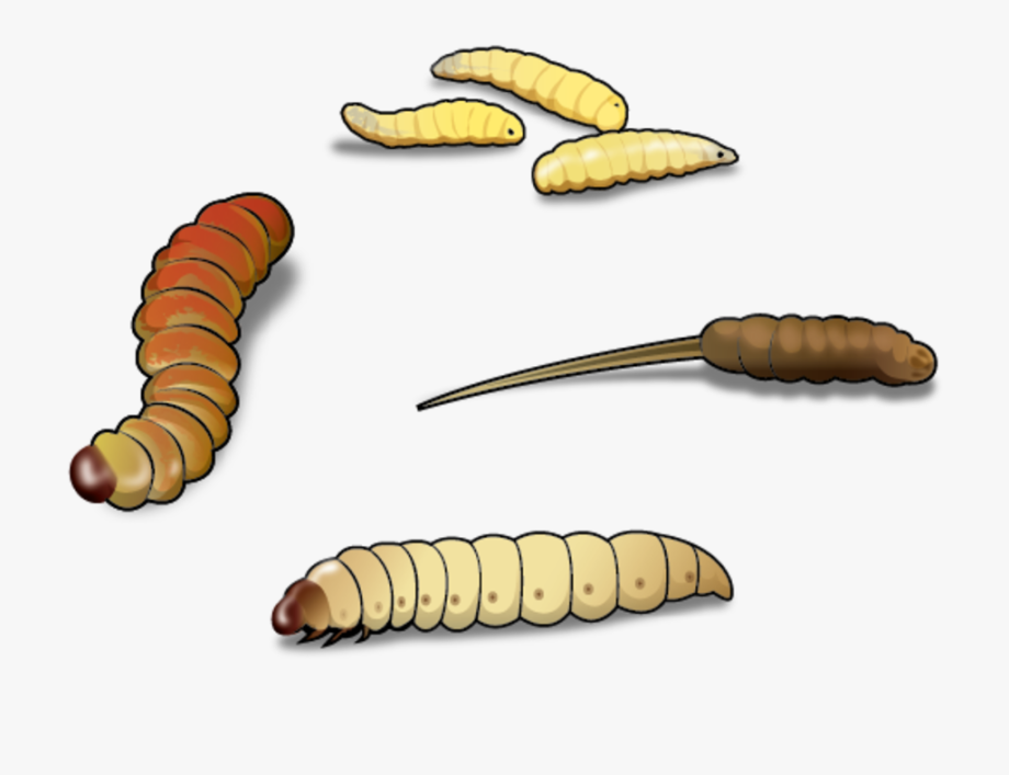 Image Inchworm Clipart Wiggle Worm.