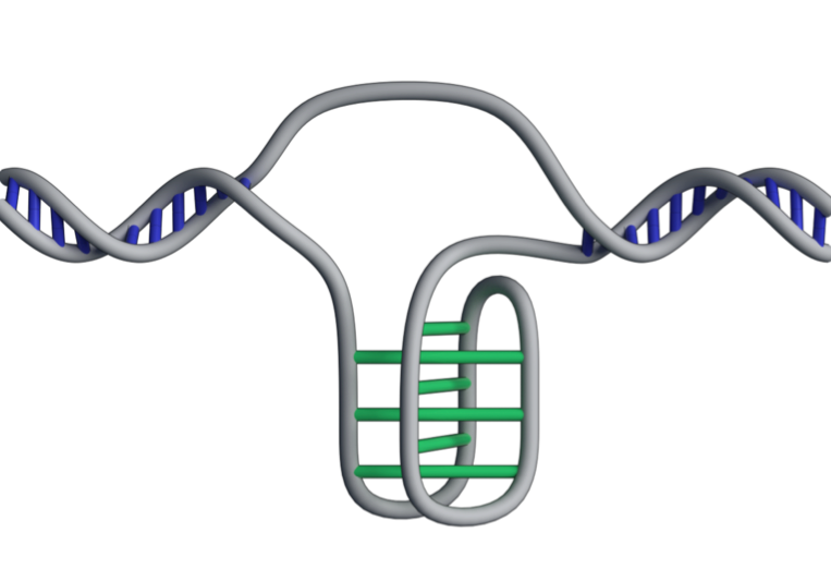 Found: a new form of DNA in our cells.