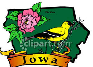 State Flower and Bird of Iowa.