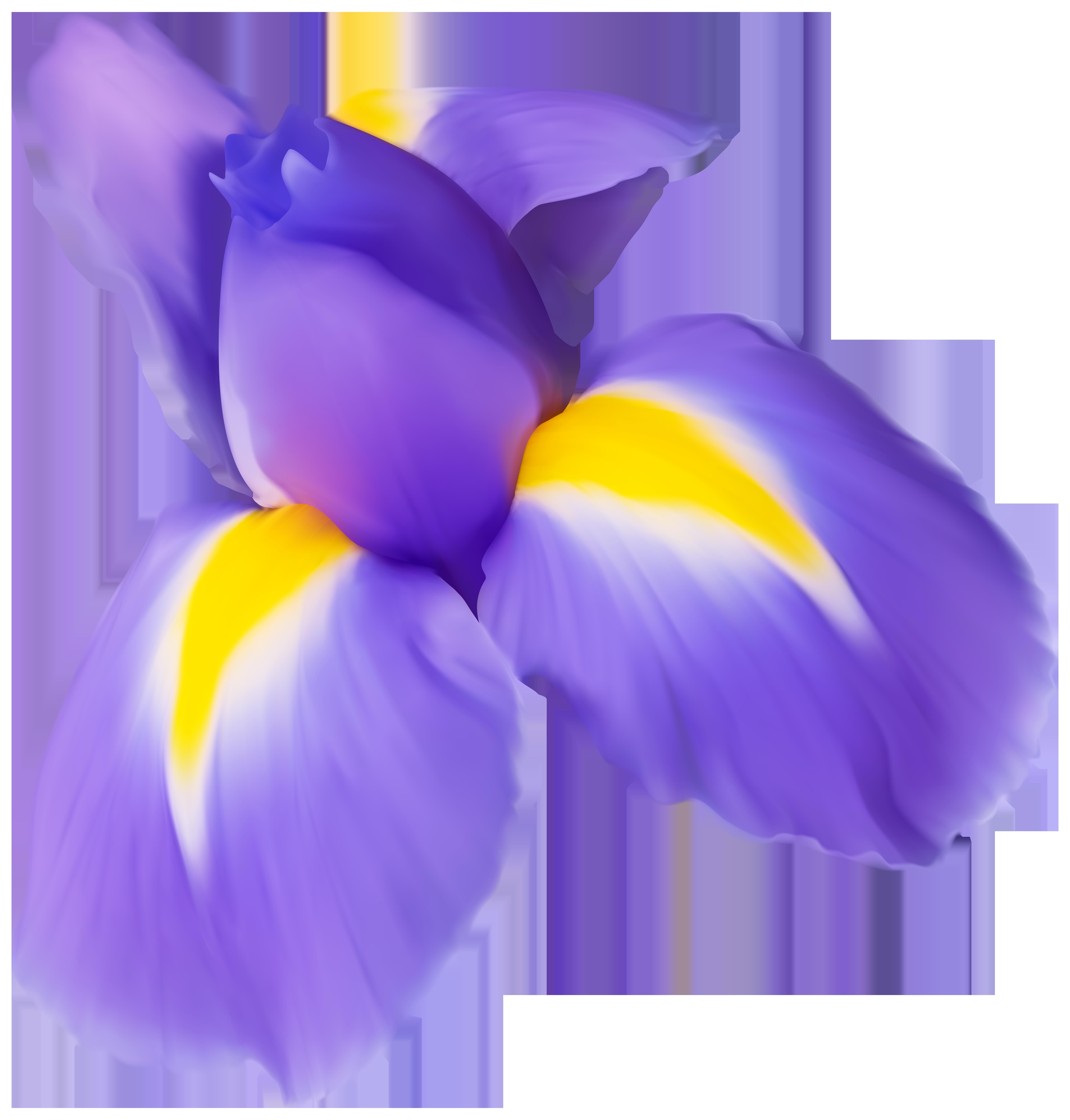 Purple Iris Flower PNG Clip Art Image.