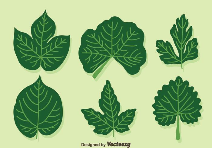 Ivy Leaf Vector.