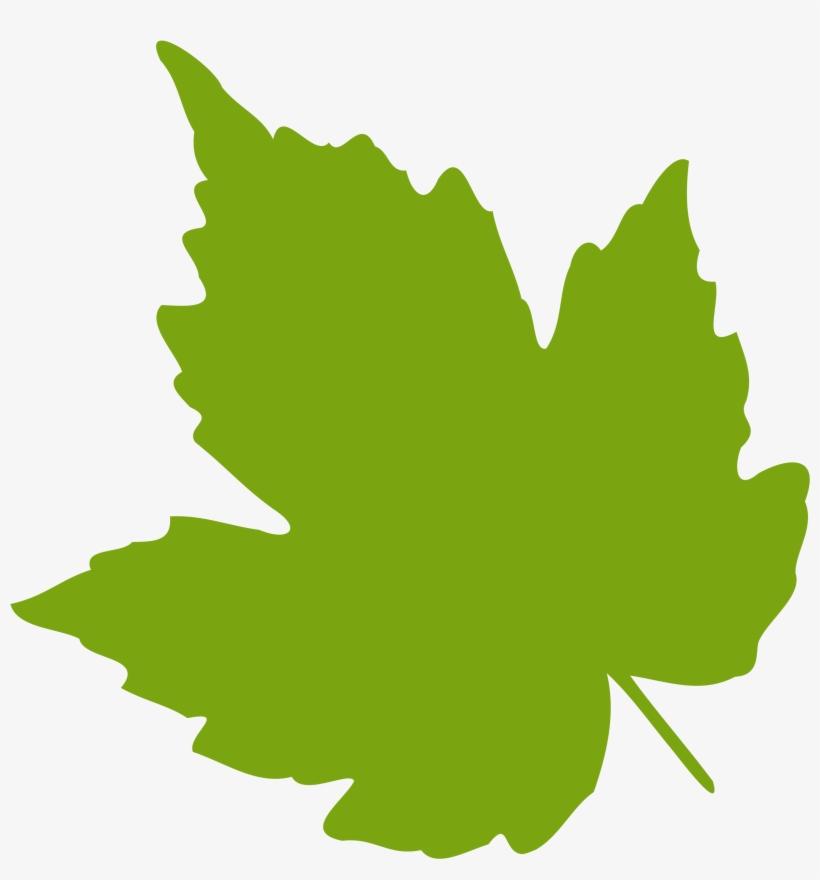 Leaf Clipart Ivy Leaf.