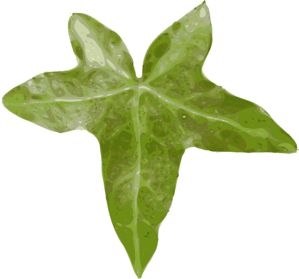 Ivy clipart ivy leaves, Ivy ivy leaves Transparent FREE for.