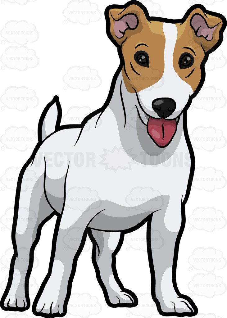 A friendly Jack Russell Terrier puppy : A dog with white.