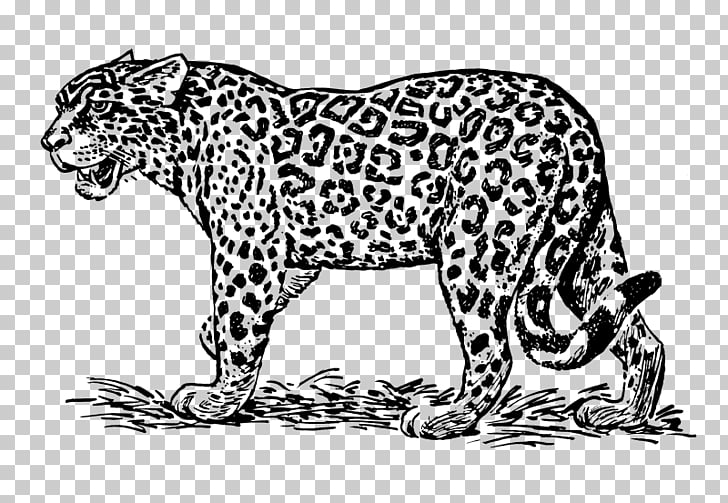 Jaguar Drawing Line art , jaguar PNG clipart.