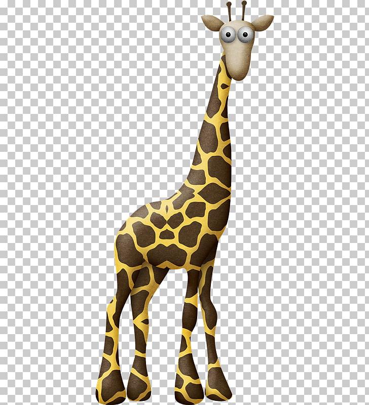 Northern giraffe , Jirafa PNG clipart.