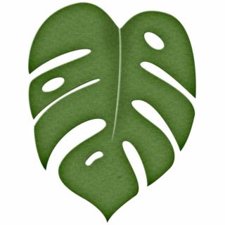 Jungle Leaf PNG Images.