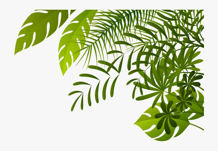 Jungle Image.