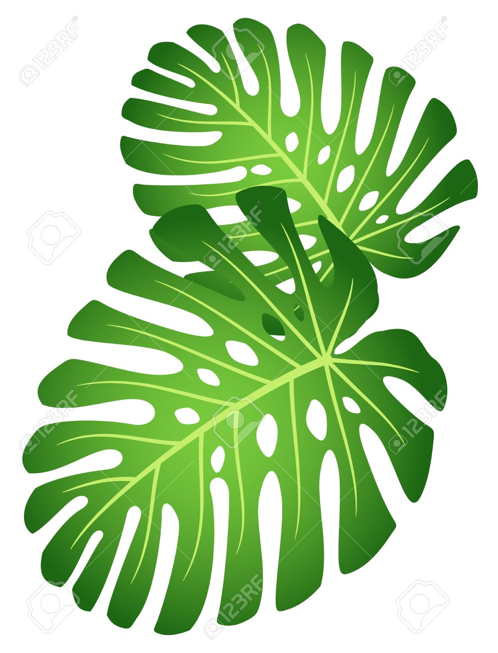 Rainforest Plants Clipart at GetDrawings.com.